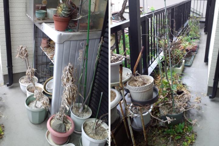 物置・植木鉢